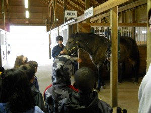 Field Trip to the EquiCenter