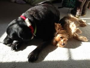 Cuddling in the sun!