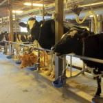 7th grade Sprout Creek Farm 2013 046