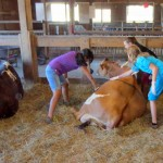 7th grade Sprout Creek Farm 2013 060