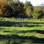 7th grade Sprout Creek Farm 2013 067