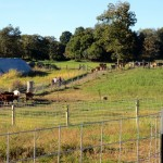 7th grade Sprout Creek Farm 2013 078