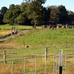 7th grade Sprout Creek Farm 2013 079