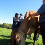 7th grade Sprout Creek Farm 2013 132