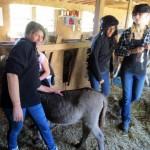 7th grade Sprout Creek Farm 2013 150