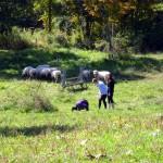 7th grade Sprout Creek Farm 2013 197