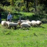 7th grade Sprout Creek Farm 2013 198