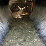 7th grade Sprout Creek Farm 2013 205