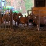 7th grade Sprout Creek Farm 2013 287