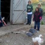 7th grade Sprout Creek Farm 2013 326