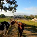 7th grade Sprout Creek Farm 2013 344