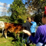 7th grade Sprout Creek Farm 2013 367